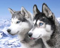 Husky Abenteuer Kinder